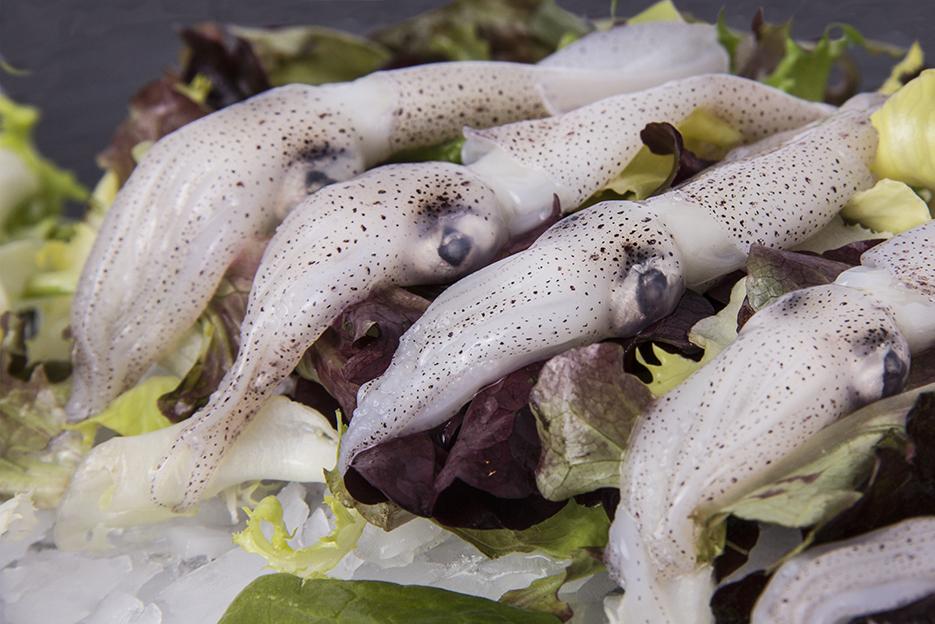 Baby squid (Loligo spp)
