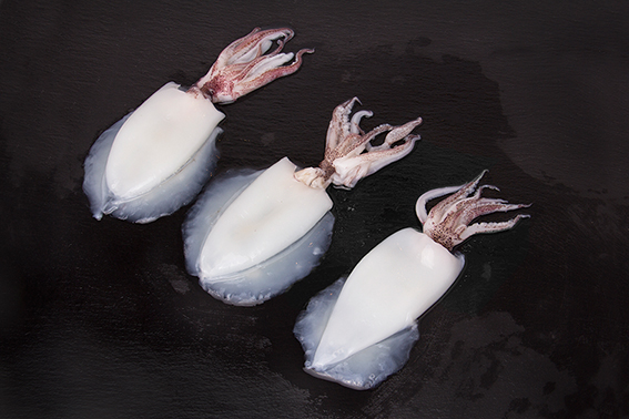 Calamar limpio (Loligo duvauceli)