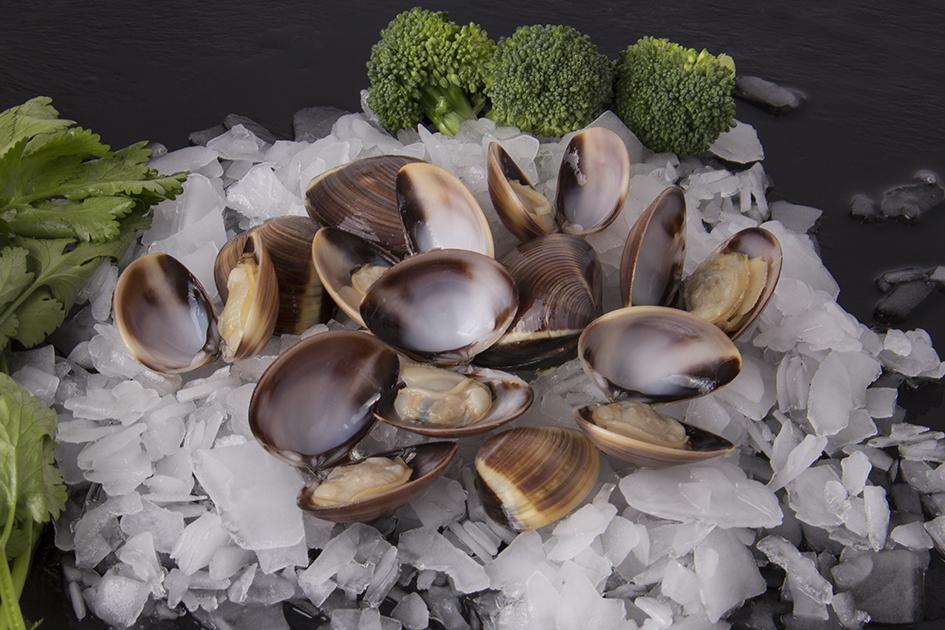 Cooked whole clam ( Meretrix lyrata)