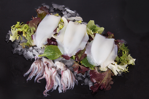 Calamar loligo limpio (Loligo chinensis)