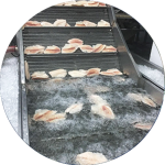 maquina pescado congelado fish frozen